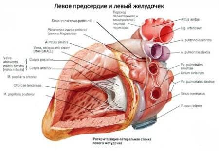 magas vérnyomás és a szívizom változásai hogyan kezeli a magas vérnyomást