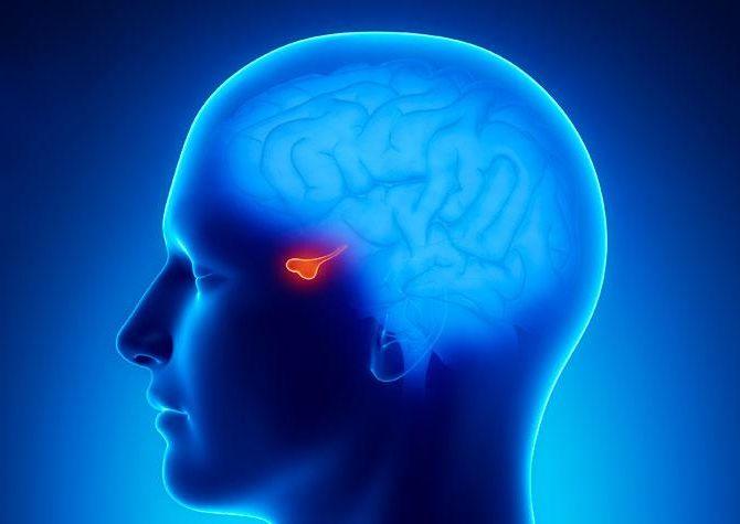 agyalapi mirigy adenoma és magas vérnyomás diéta mit kell enni magas vérnyomás esetén és mit nem
