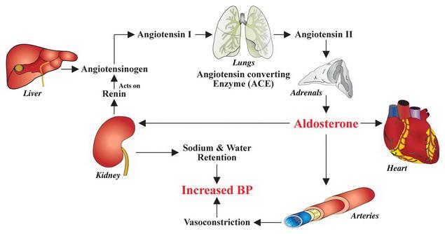 mi a magas vérnyomás 2 fokos szív mi ez hogyan kell inni magas vérnyomás esetén