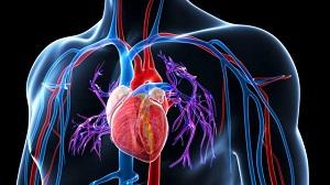 septum tinktúrák a magas vérnyomás kezelésére diéta magas vérnyomás ellen