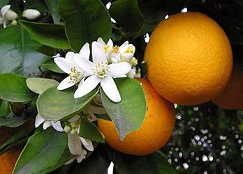 lehetséges-e enni a magas vérnyomású mandarint Tippek a magas vérnyomás kezelésére