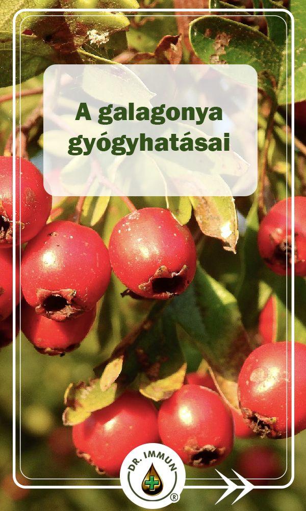Györgytea Galagonya (Crataegus monogyna, Crataegus laevigata) - Györgytea